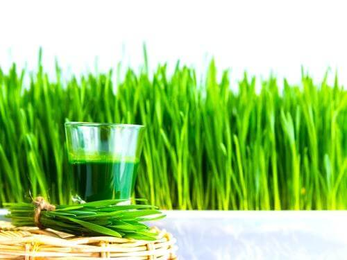 Shot glass of wheat grass with fresh cut wheat grass